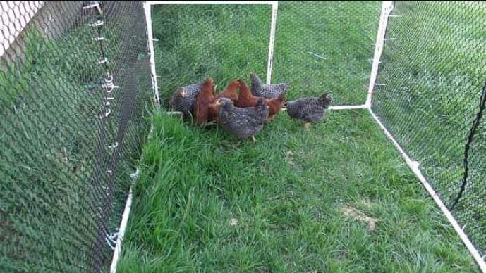 Jenis Kandang Ayam yang Sering digunakan Oleh Peternak
