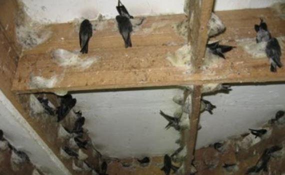 Hal yang Harus Diperhatikan Sebelum Membuat Rumah Burung Walet